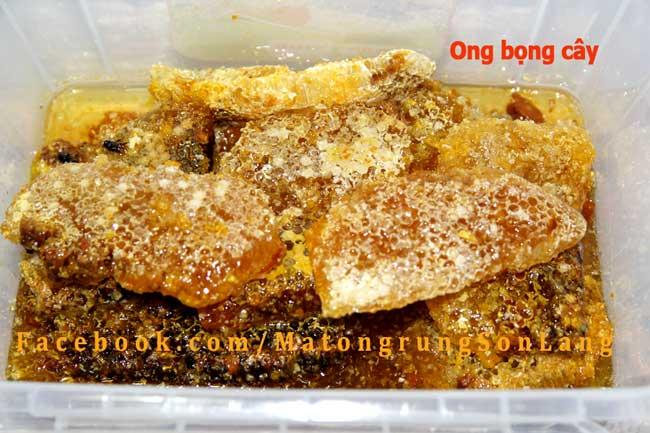 Sáp mật ong đá làm trong thân cây
